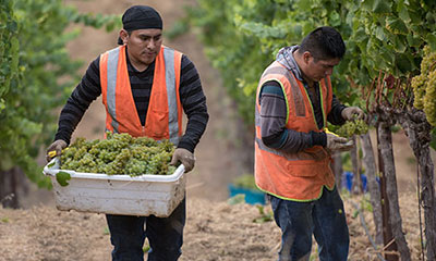 How the Wine Industry Cares For Its Farmworkers