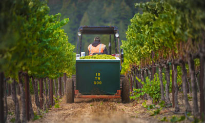 Harvest Napa Valley 2014 is Underway!