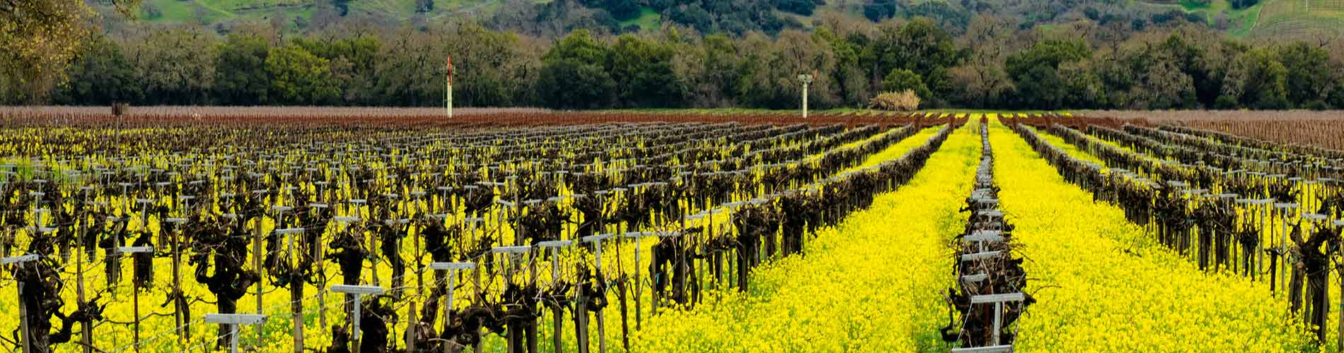 Napa Valley - Cultivating excellence